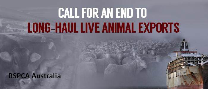 Stop Live Sheep Exports