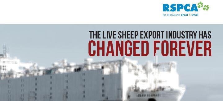 sheep change